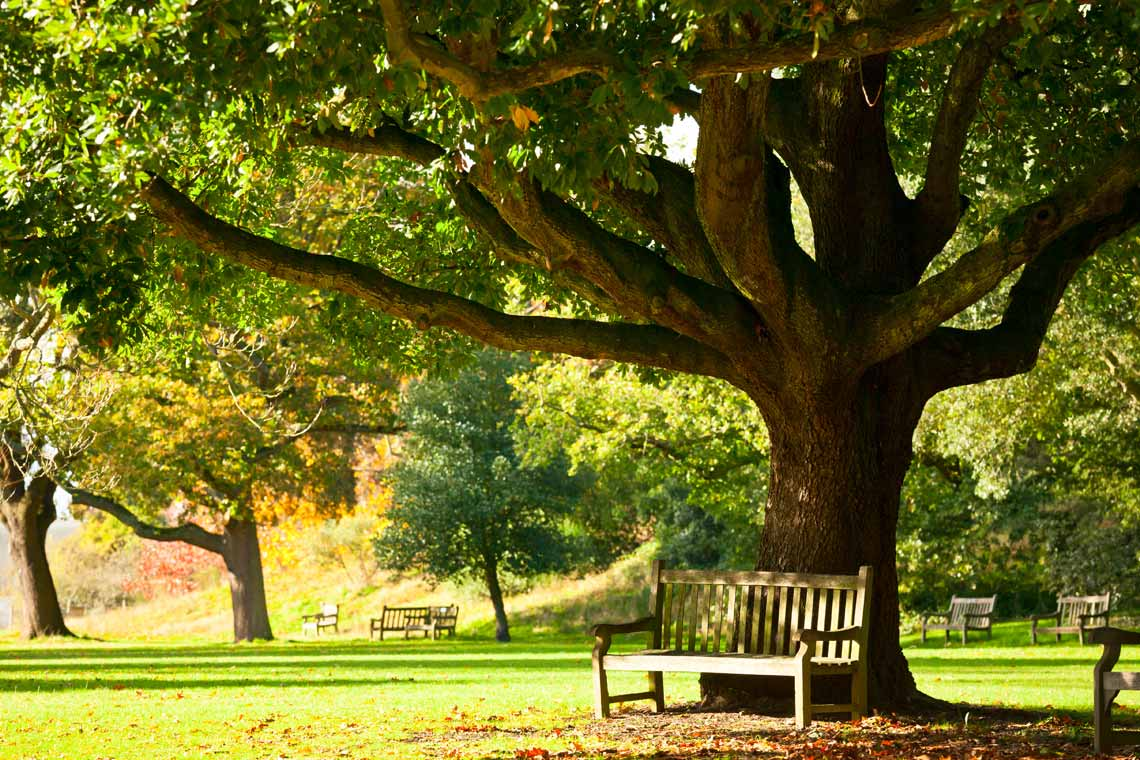 Park bench under a tree